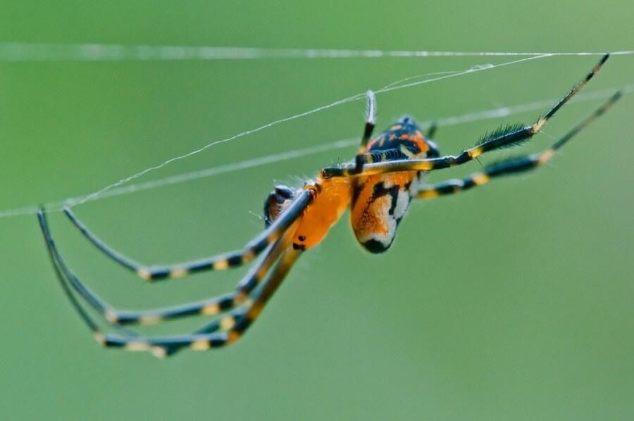 Rushen - Spider