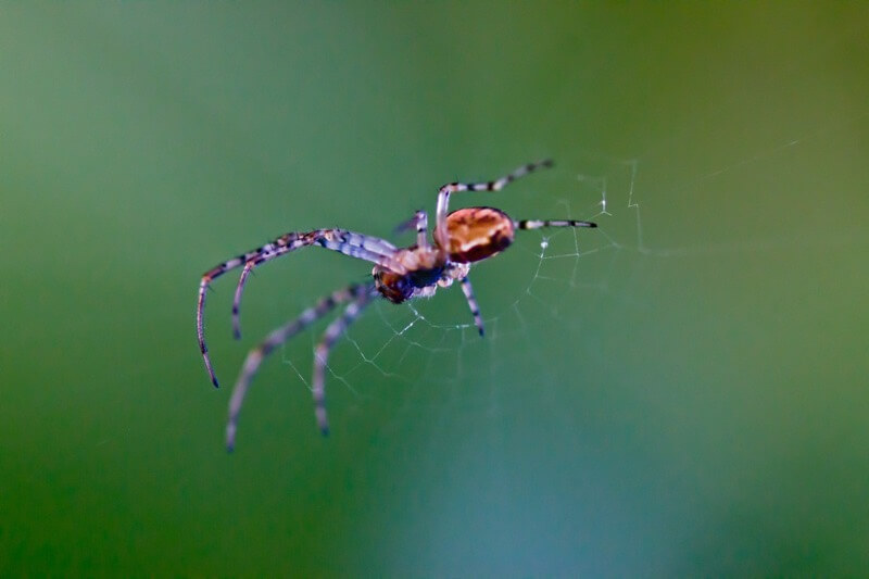 mantas j photography - spider