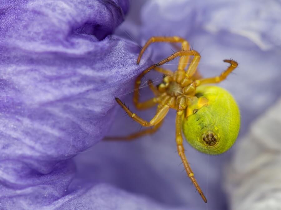 Dan - Spider