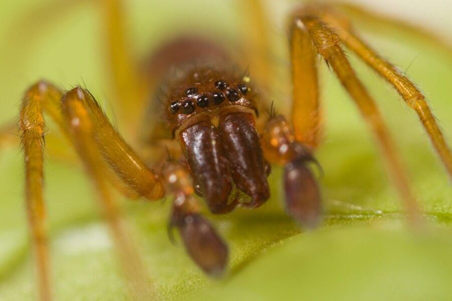 Gido - Spider