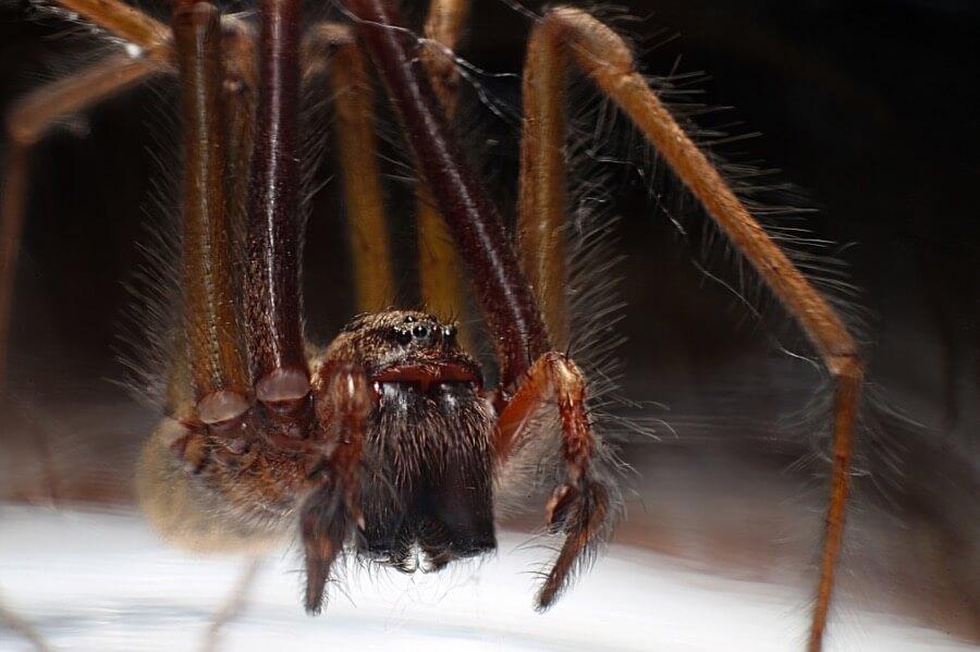 Brian Tomlinson - Spider