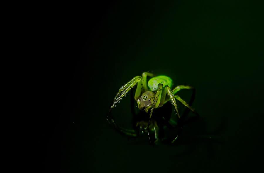 Steve H. - Spider