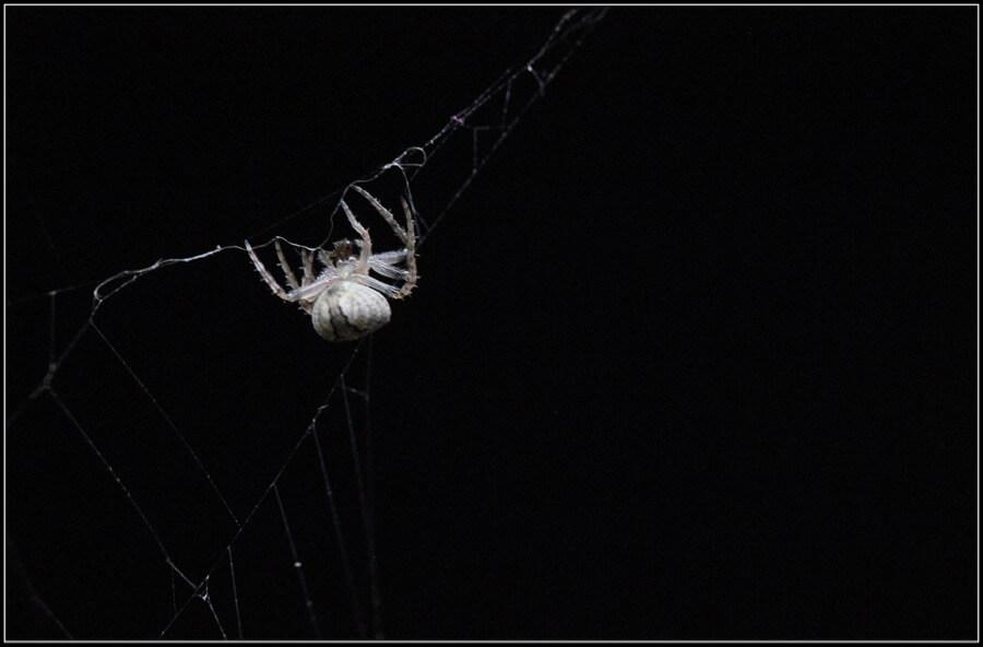Marta Diarra - Araña - Spider