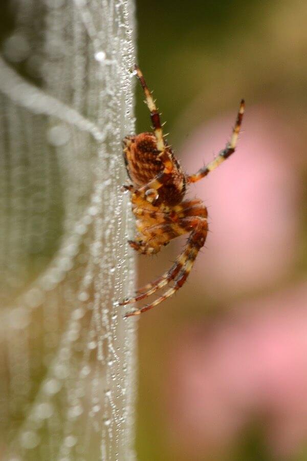 Alias 0591 - Spider