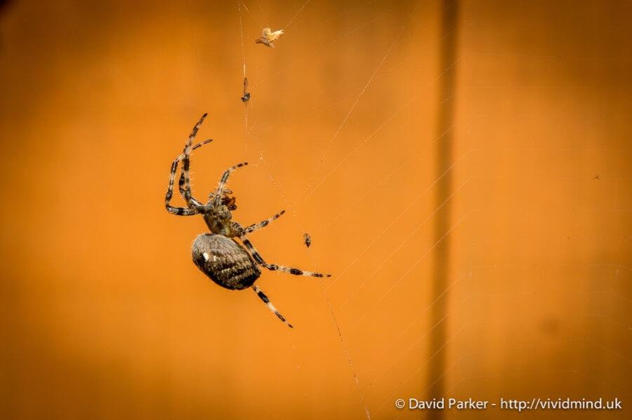 David Parker - Spider