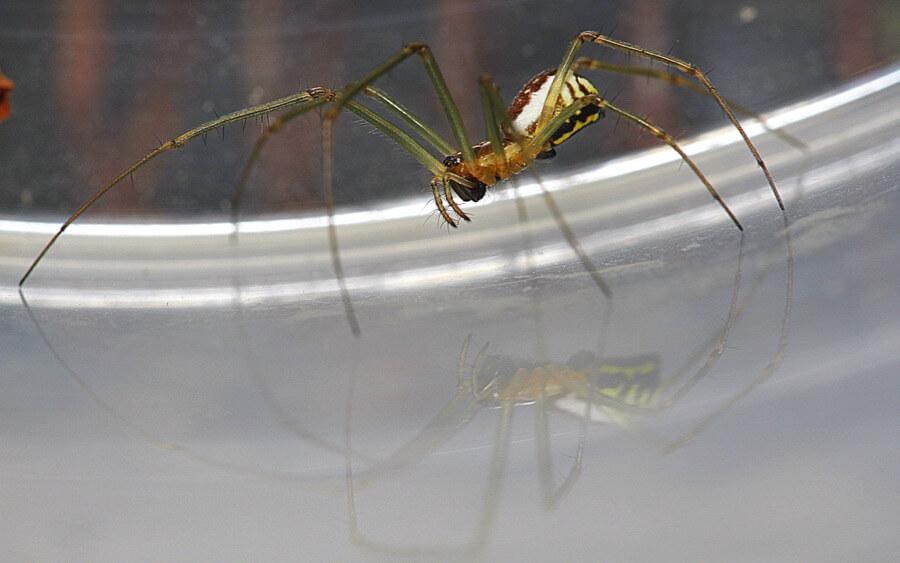 Rolf B. - Mirror-Spider - Spiegelspinne