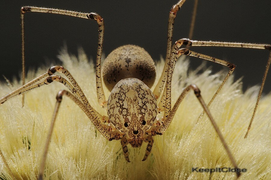 Mike Keeling - Spitting Spider