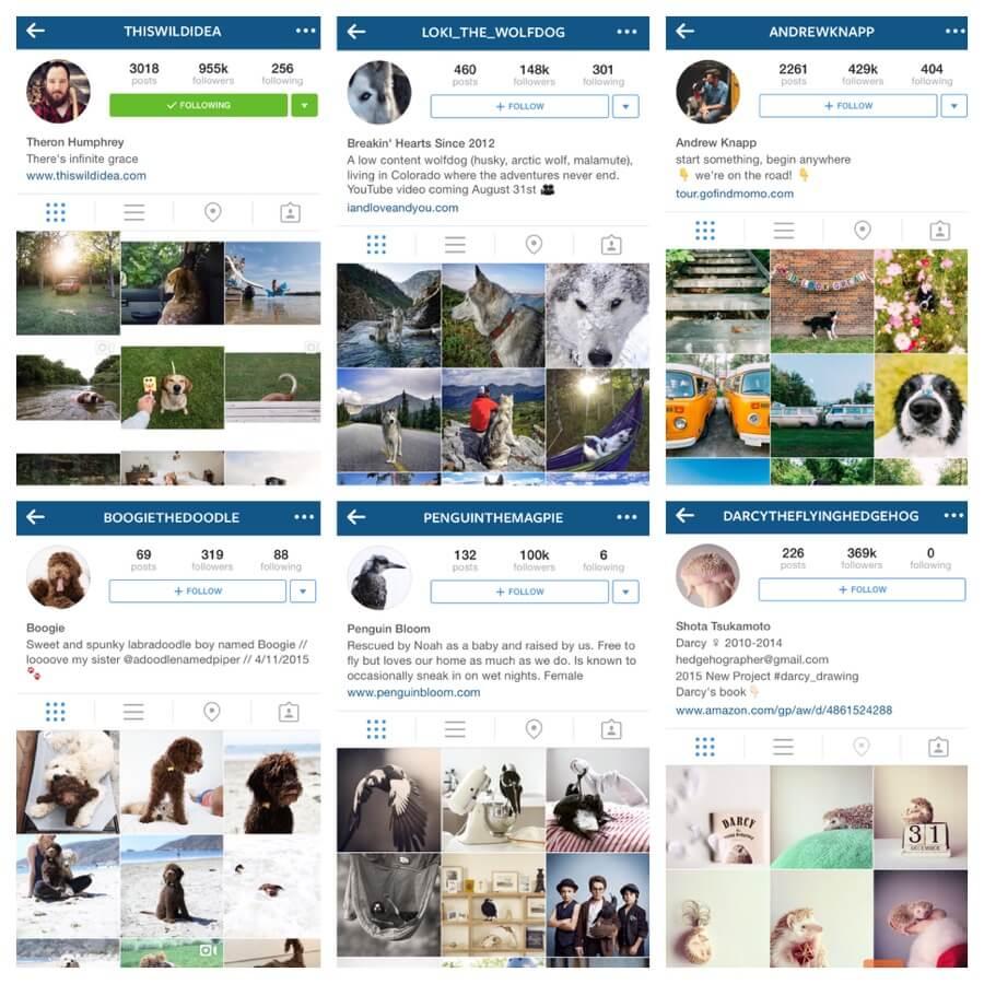 animal instagrams