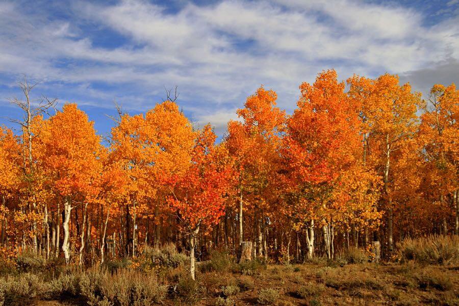 Bob Palin - Aspen Colours