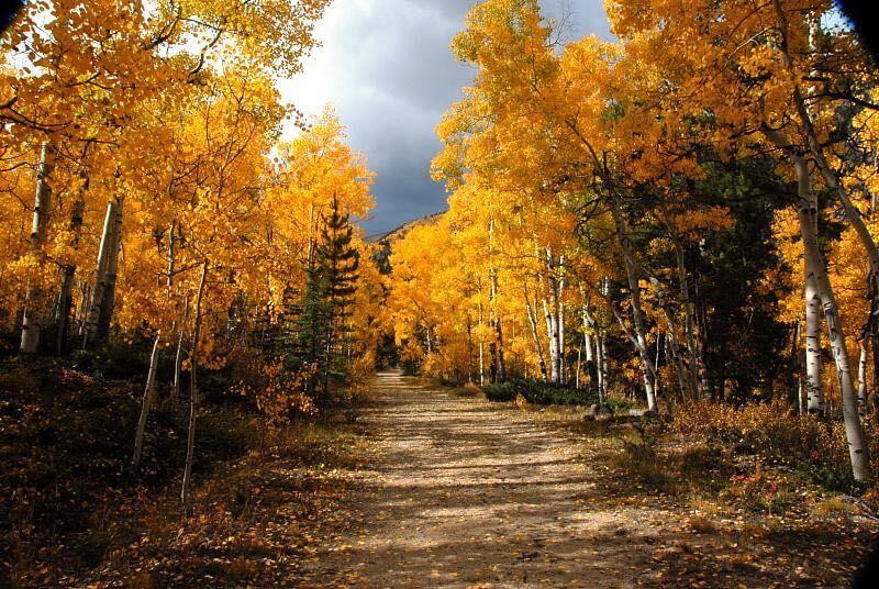 Aspen Leaf And Tree Photos The Photo Argus