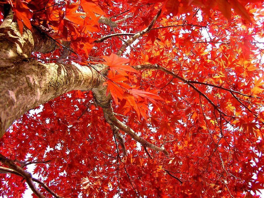 liz west - momiji from below
