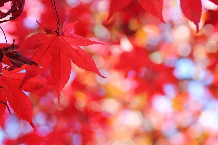 t-mizo - Autumn Leaf Color (Hirosaki, Aomori, Japan)