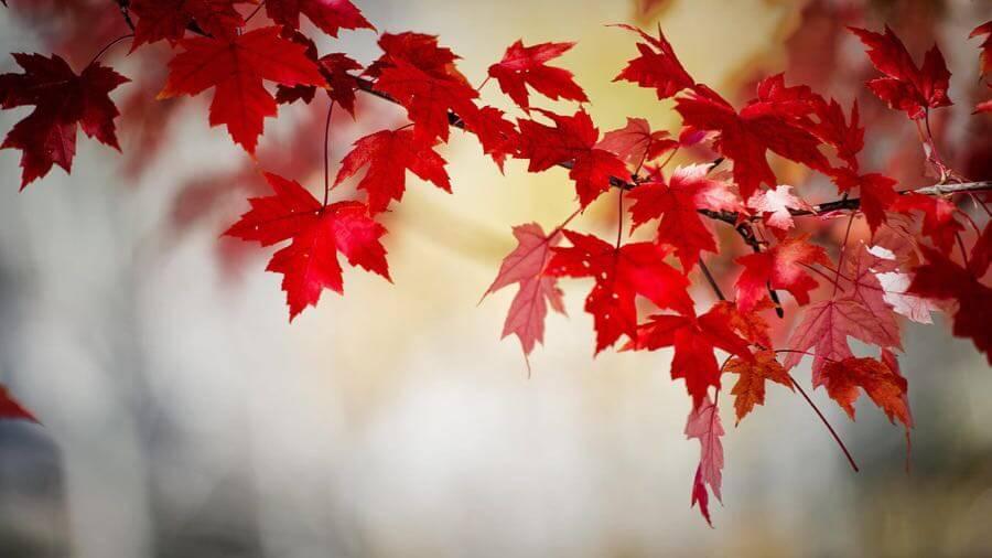 nedim chaabene - Autumn