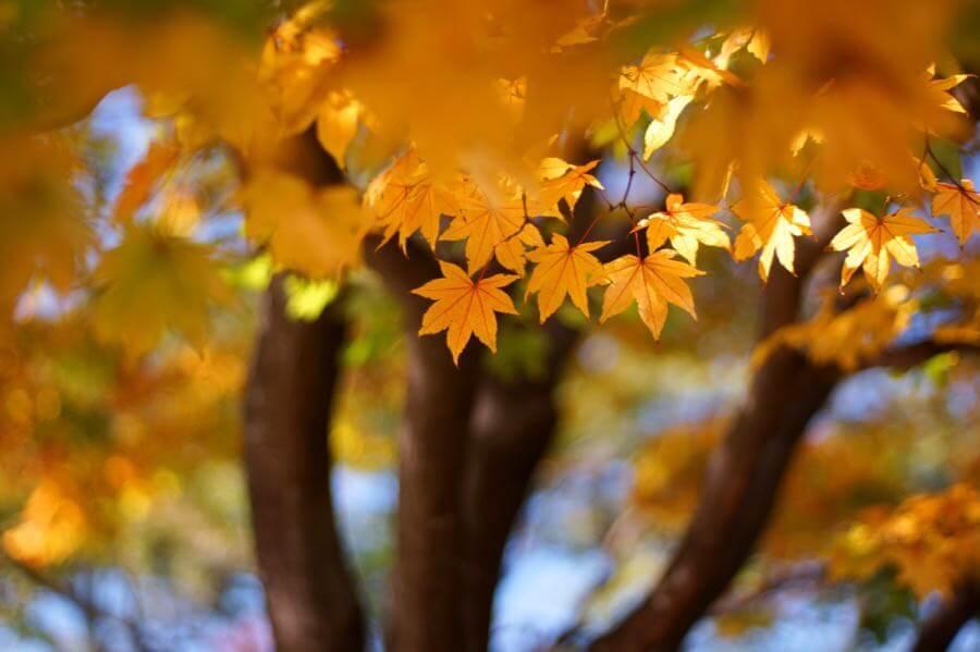 Takashi .M - Little autumn