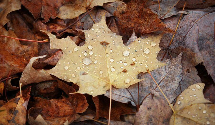 Thirdblade Photography - Autumn Drops