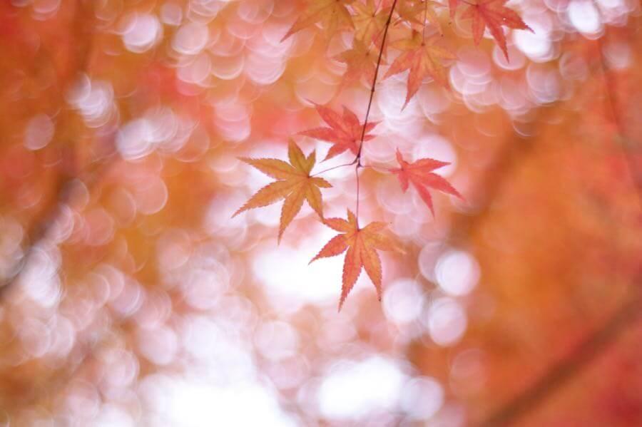 けんたま/KENTAMA - Pink Autumn