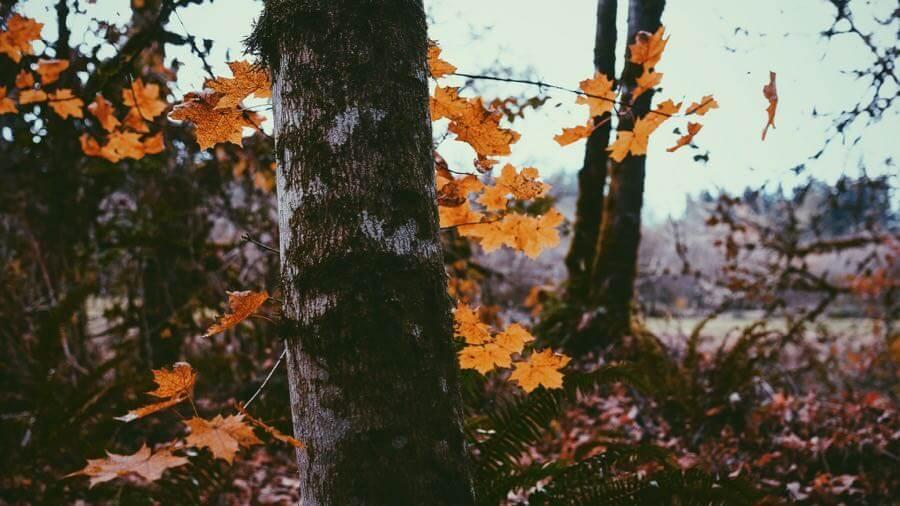 Loren Kerns - End of autumn