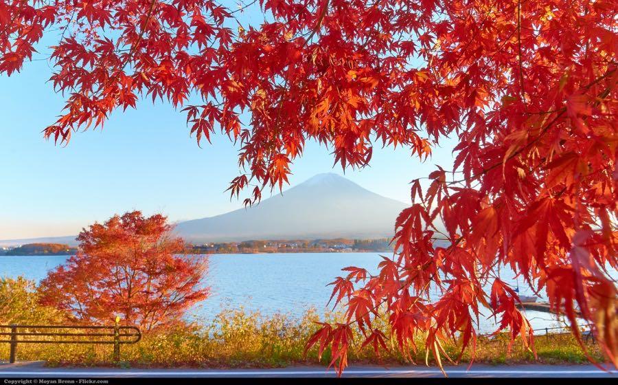 Moyan Brenn - Autumn