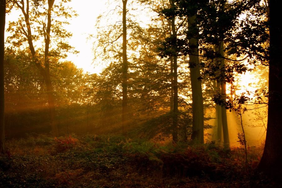 topher76 - autumn sun