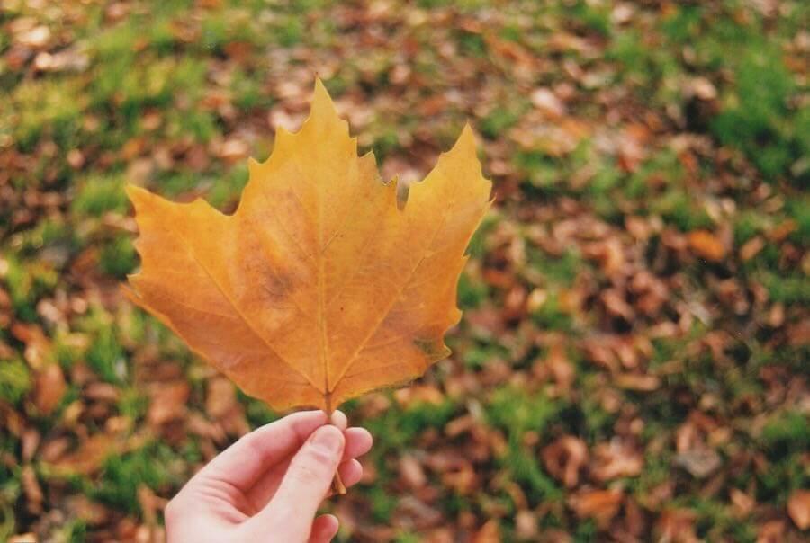 Cameron Bathory - Autumn