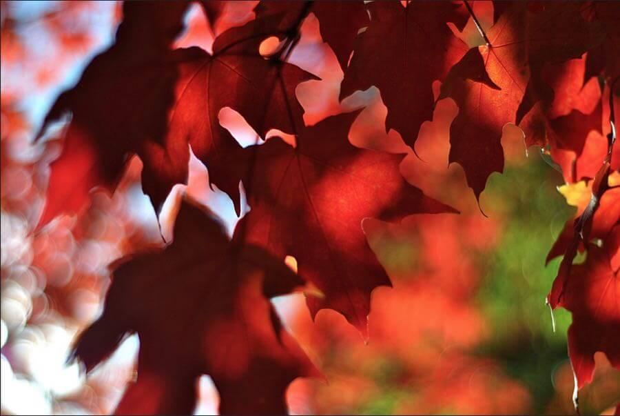 Christopher - Changing Seasons