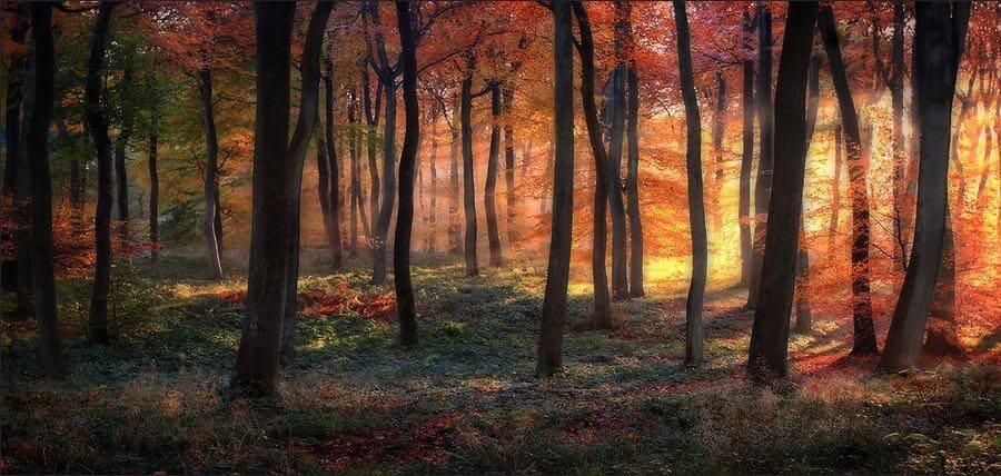 Ceri Jones - Golden Woodland Dawn
