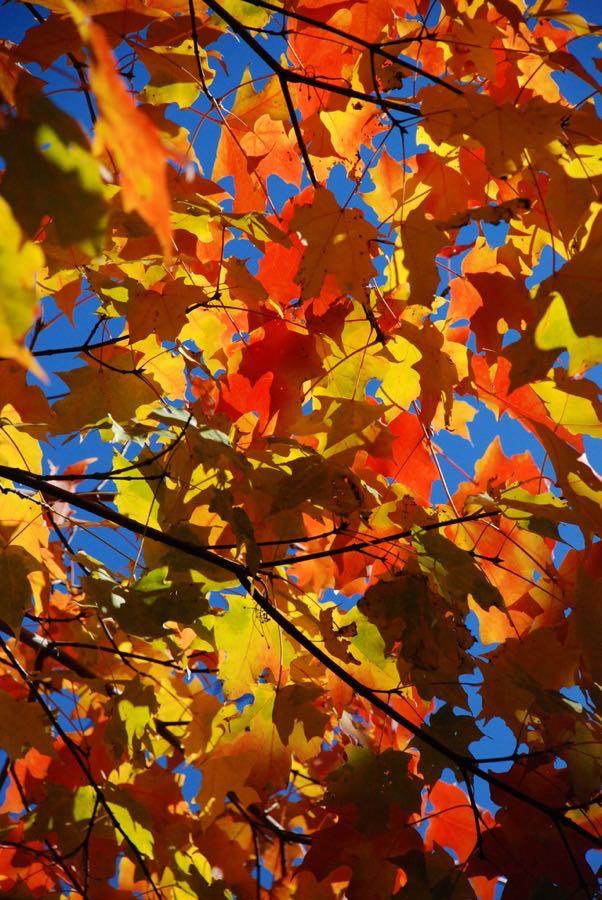 Joe Shlabotnik - Autumn Leaves