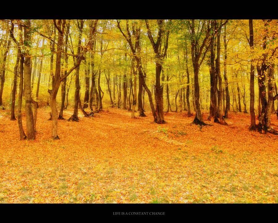 mangloard - leaves