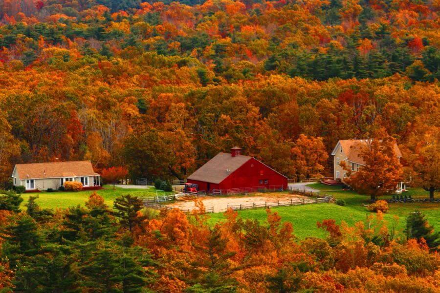 Elliot Gilfix - Autumn Colors