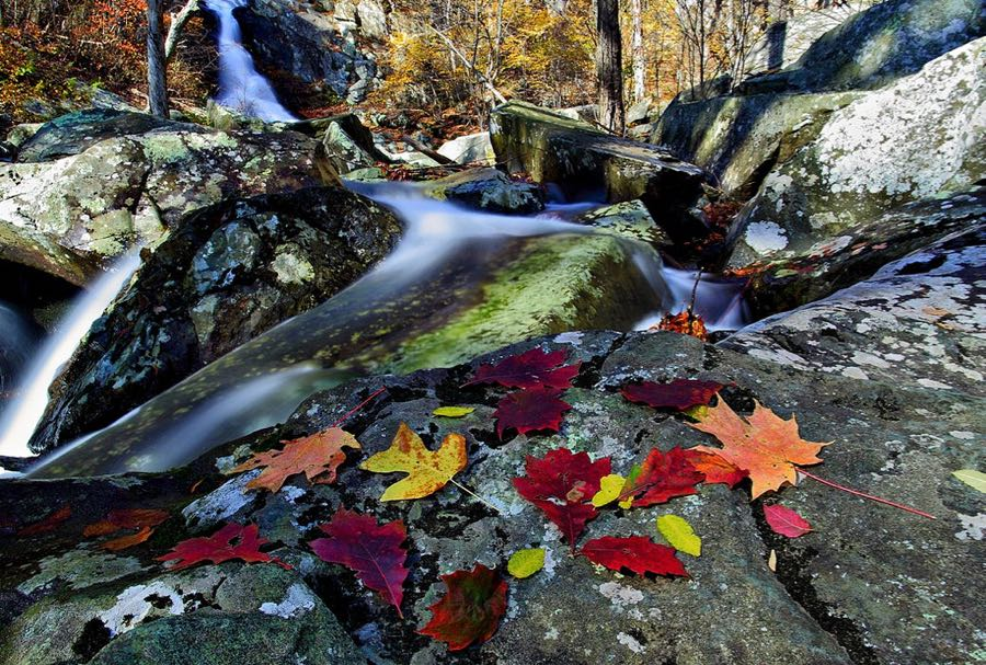 Forest Wander - Autumn leaves near waterfall