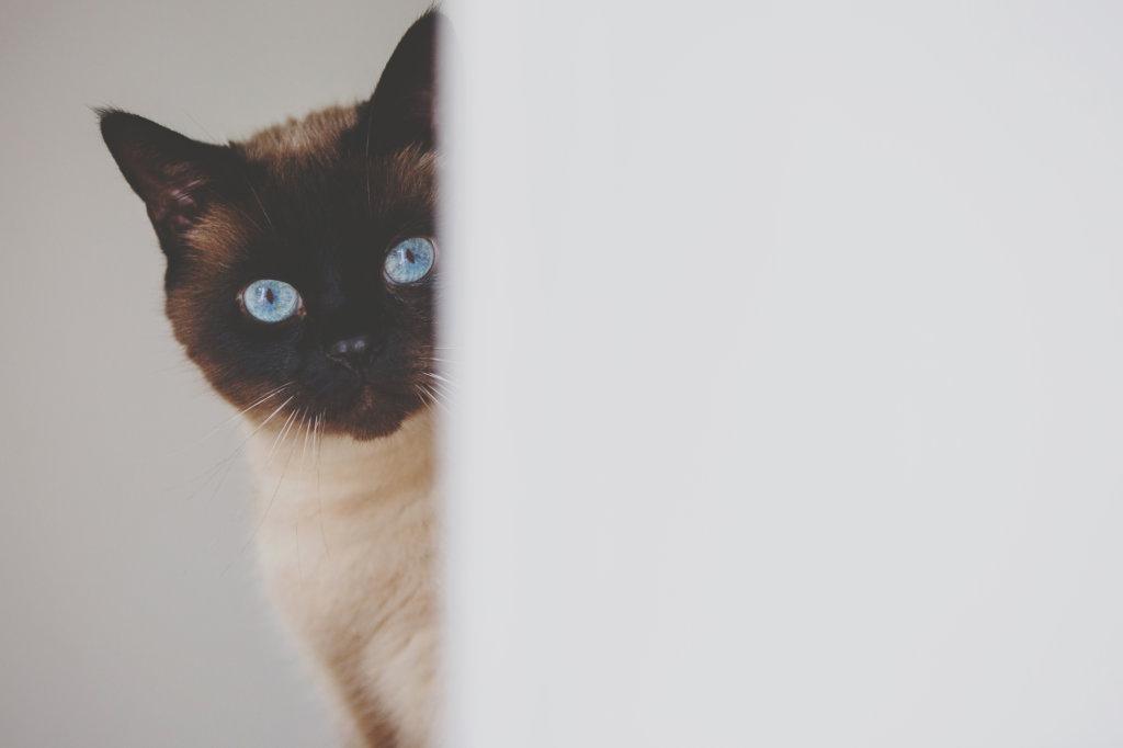 cat around the corner