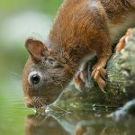 How to Photograph Squirrels: Great Tips and Photos by Gladys Klip