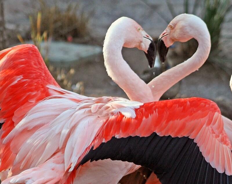 Lori Branham - Dance of Love