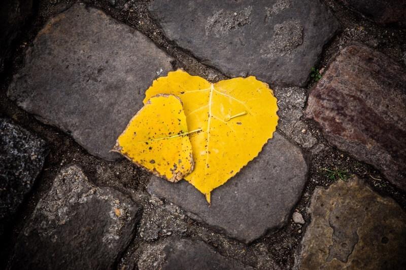 Jean-Jacques MATTEI - Fallen in love