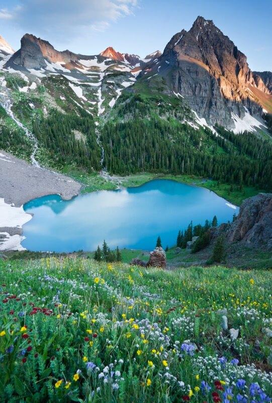 Blue Lakes Flowers - Grant Ordelheide
