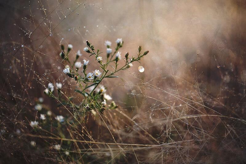 beautiful small white flowers