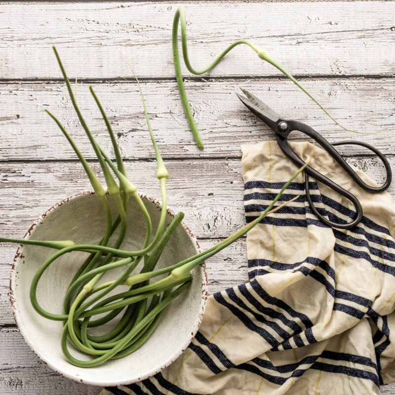 Carol Hart Garlic Scapes