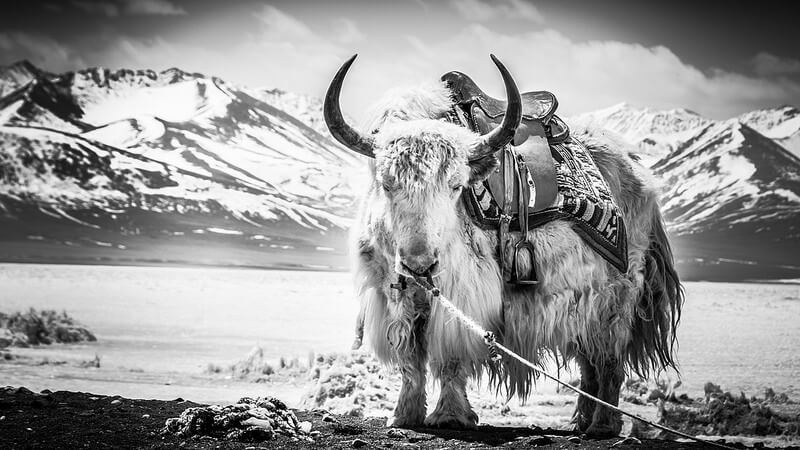 60 Inspiring Examples of Black and White Photography - The ...