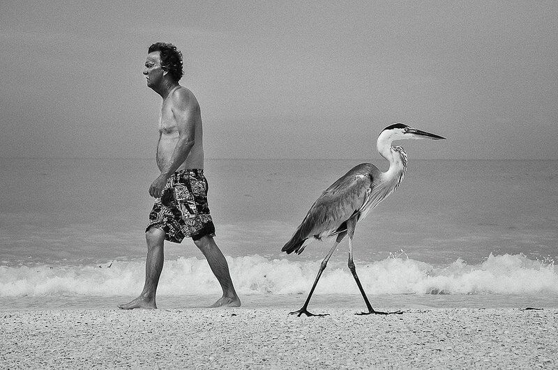 man walking by stork