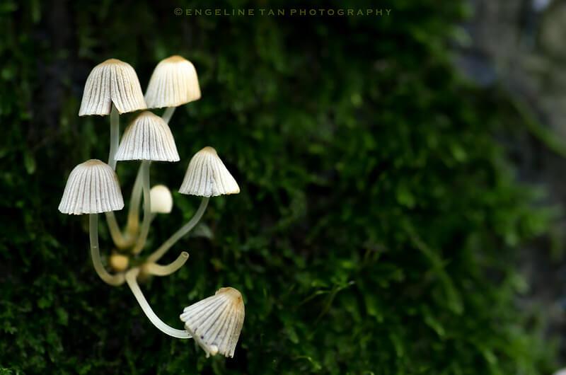 mushroom chandelier