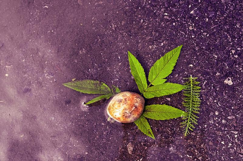 rock and green leaf