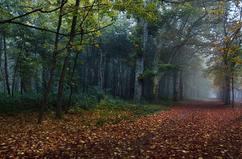 forest in Austria