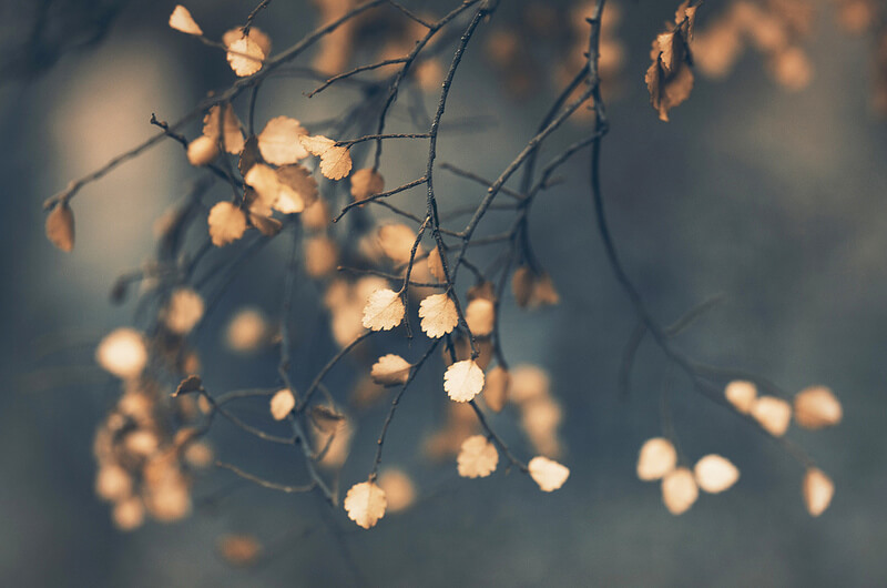 bokeh tree leaves