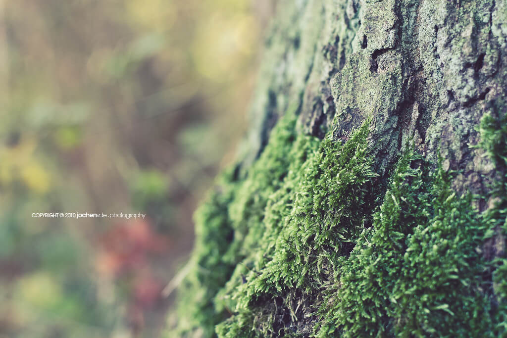 tree moss bokeh