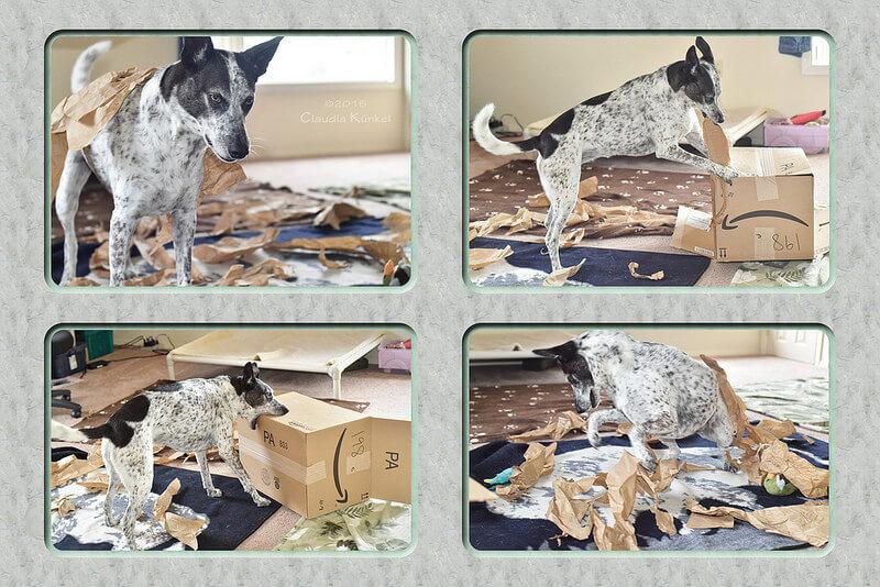 dog chewing amazon box