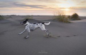 1 Dog, 52 Weeks: Inspiring Photo Project by Claudia Künkel