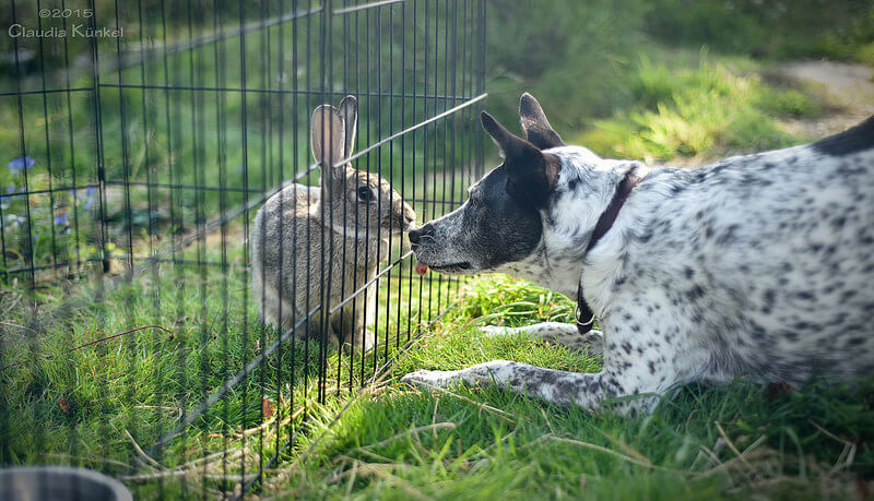 dog sniffs rabbit