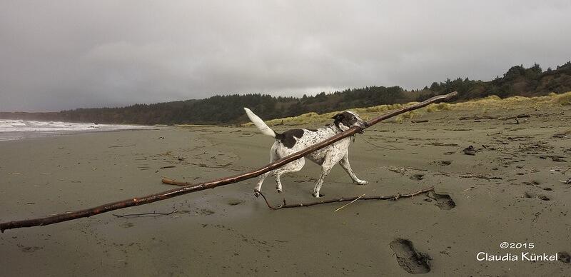 dog carrying big stick