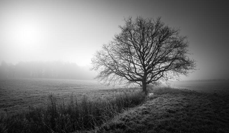 Guist Woodland