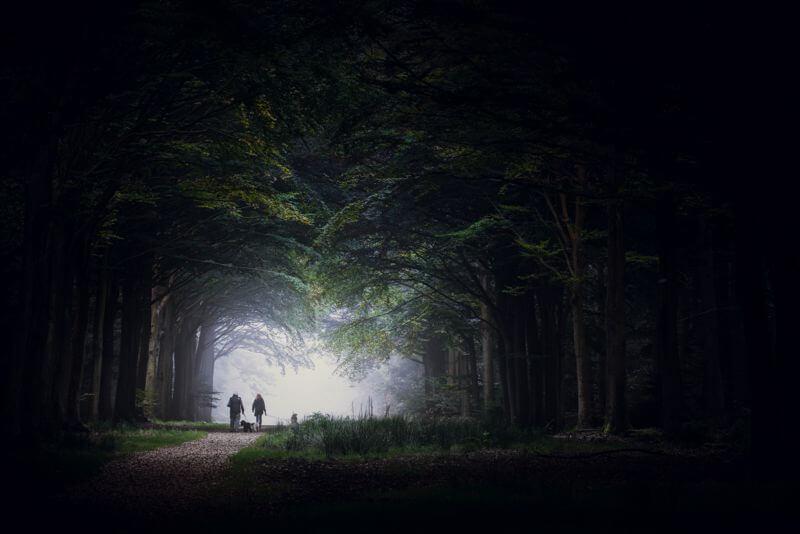 Felbrigg Woods